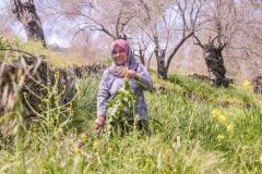 Foraging in Ayvalik, Turkey
