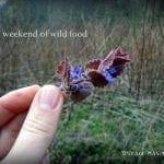 wild food weekend