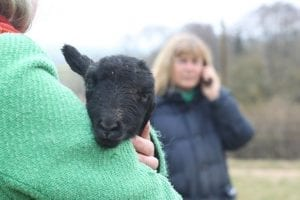Unrelated cuteness - we got to cuddle baby lambs!